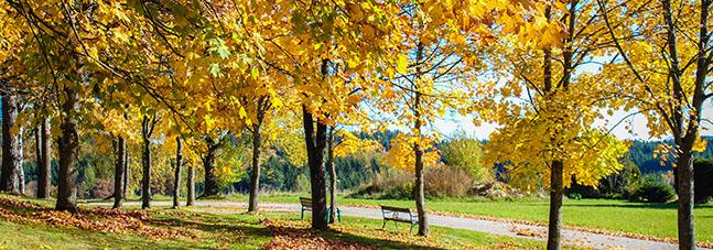 Xundes Herbsterlebnis im Moorheilbad Harbach